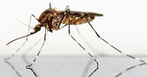 Die Diplomatie der Mücke